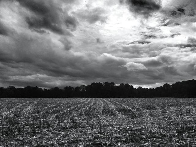 Fields:Tropical Storm Karen 7 October 2013 photo 2
