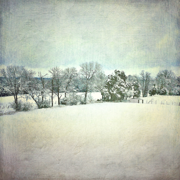 field in winter snow