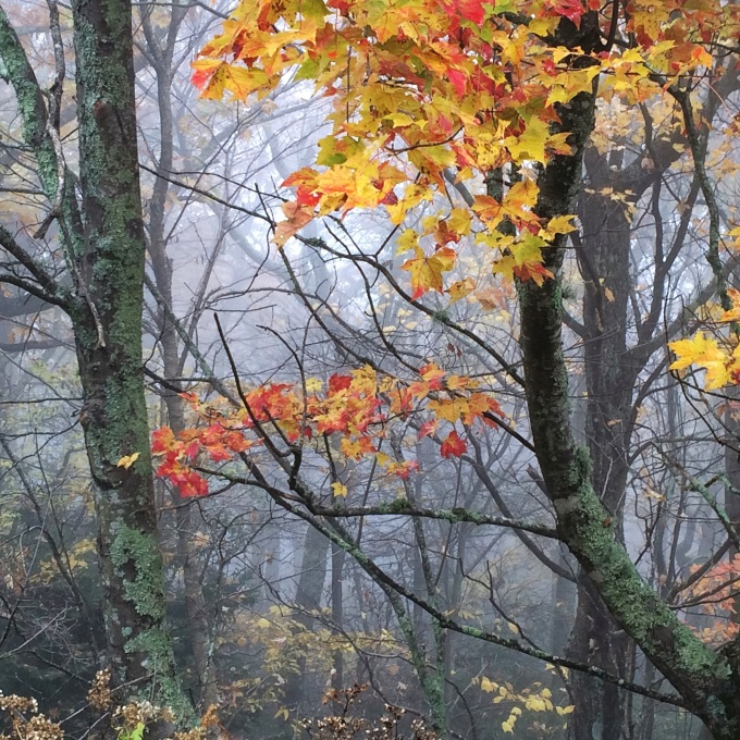 fog and autumn leaves 1