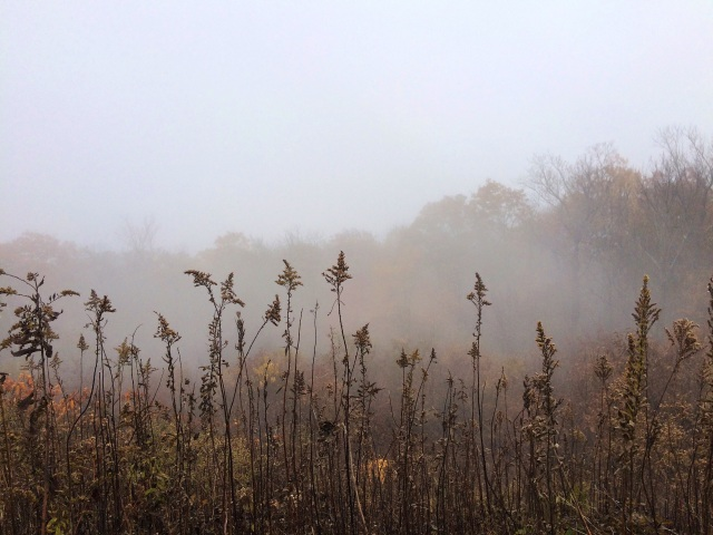 fog and autumn leaves 3