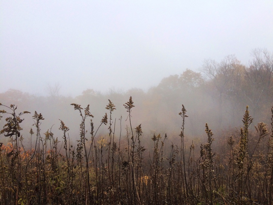 fog and autumn leaves 3
