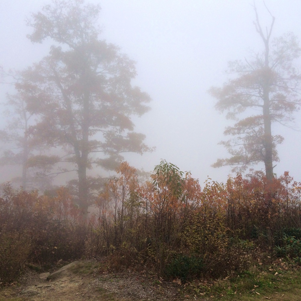 fog and autumn leaves 4