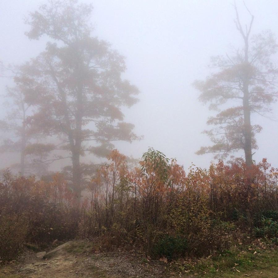 fog and autumn leaves 4