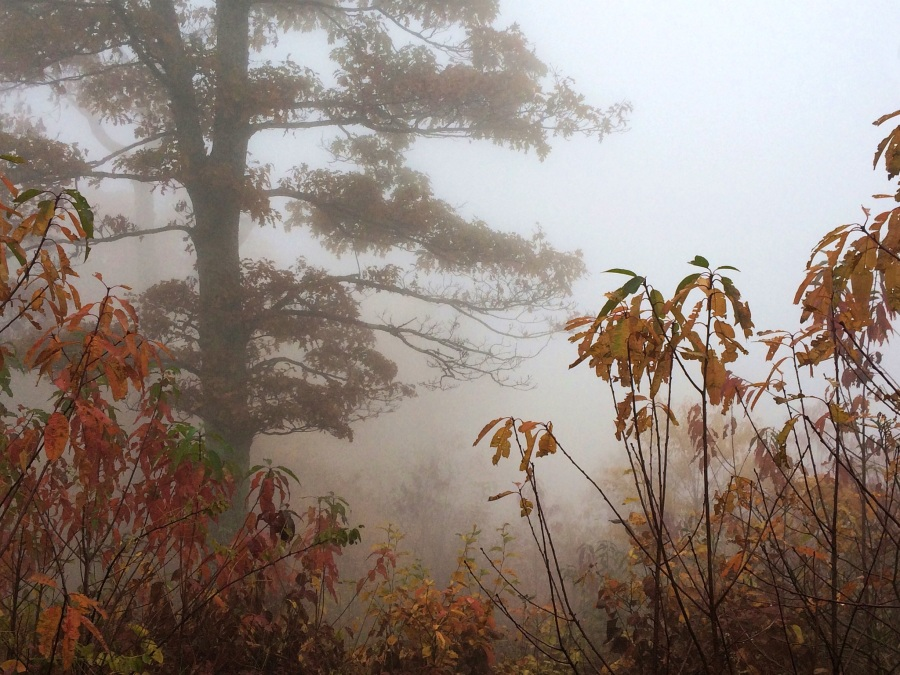 fog and autumn leaves 5