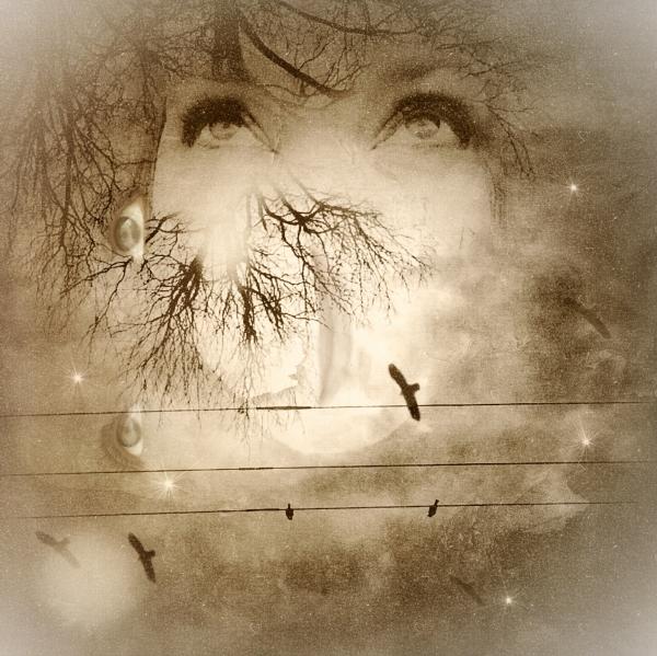 Melissa D Johnston-Muse-Story-OTPH