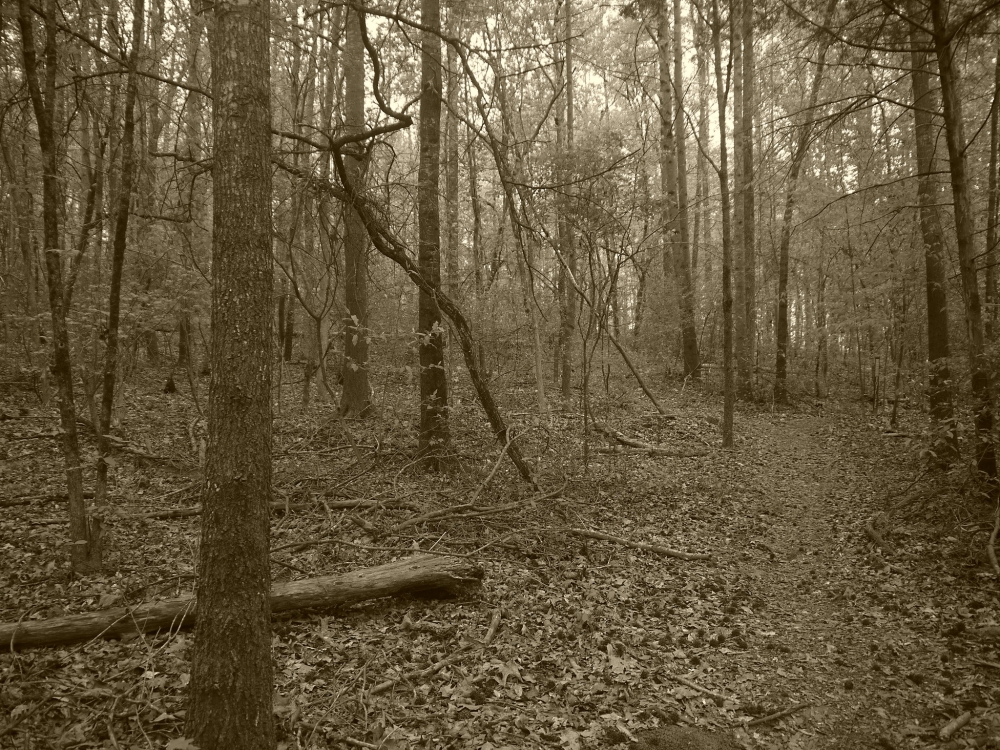 Tugaloo State Park 3.1 Flickr L