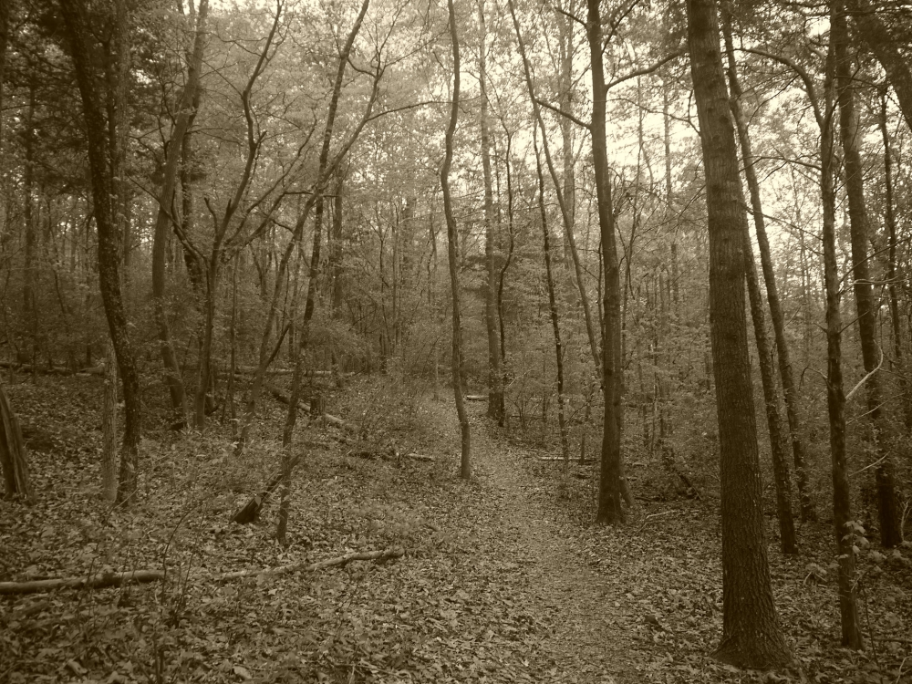 Tugaloo State Park 4.1 Flickr L