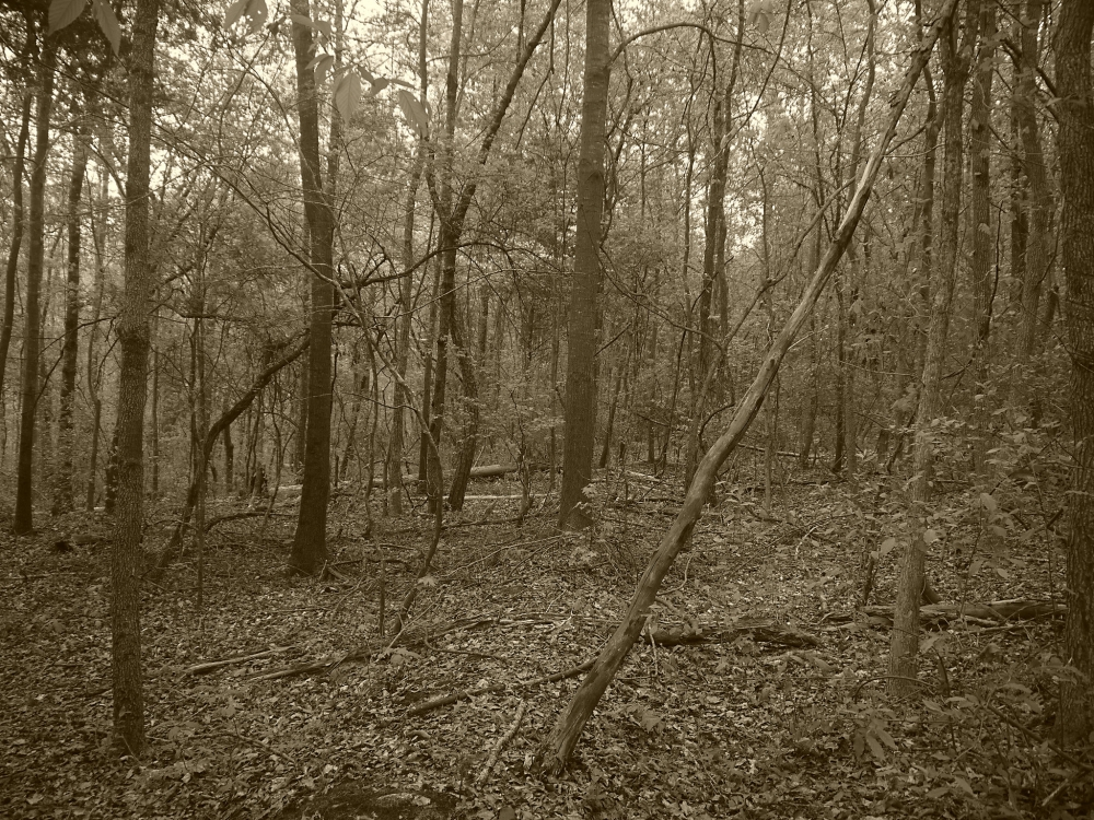 Tugaloo State Park 5.1 Flickr L