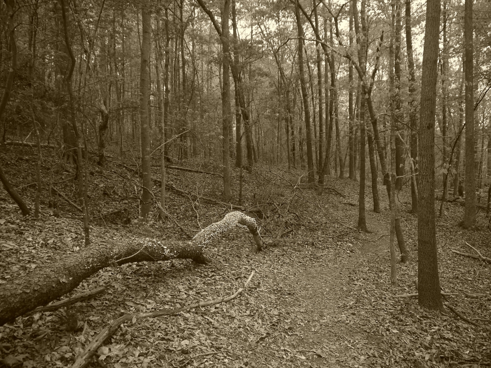 Tugaloo State Park 6.1 Flickr L
