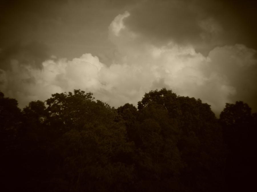 Holga batch 1.1 wp flickr L