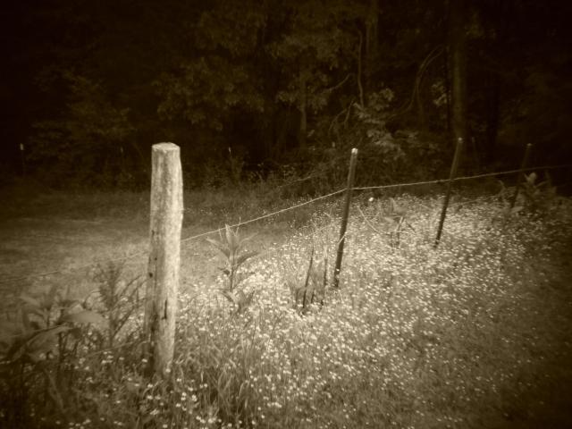 Holga batch 1.2 wp flickr L