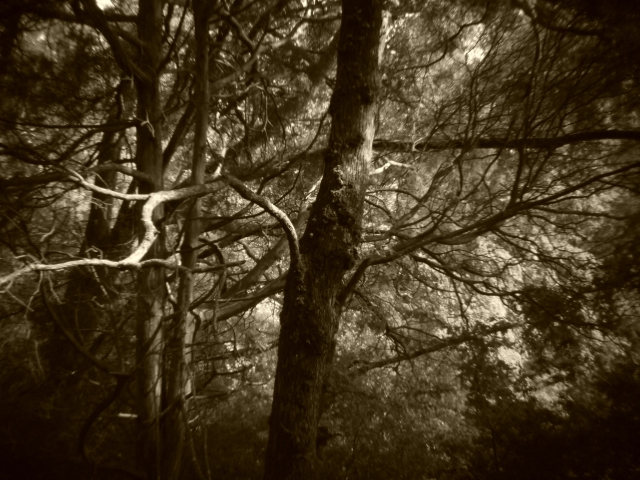 Holga batch 1.3 wp flickr L