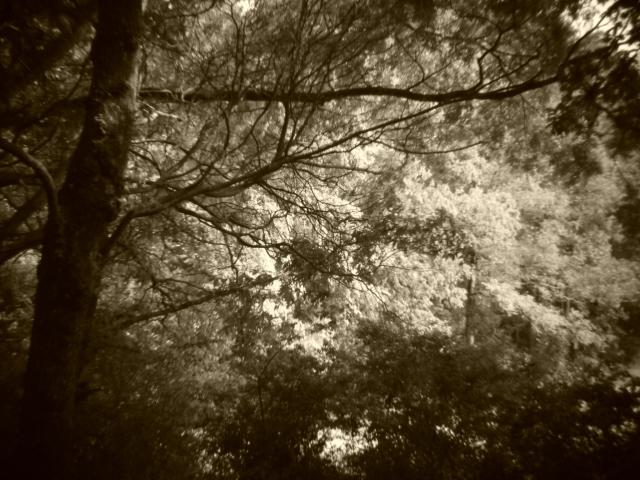Holga batch 1.4 wp flickr L