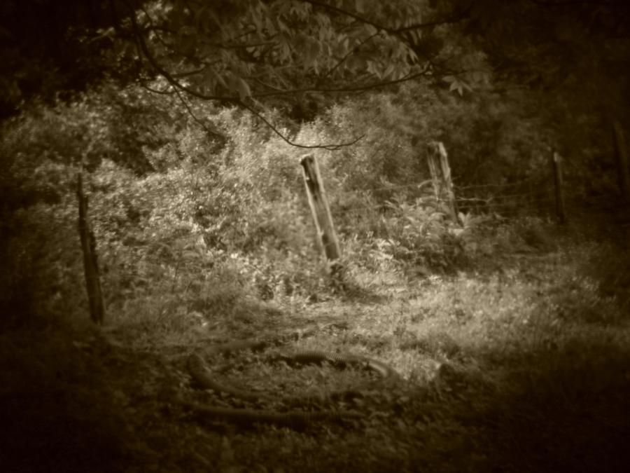 Holga batch 1.6 wp flickr L